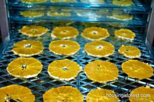 pomarańcza suszona